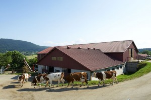 FARM MILK PRODUCERS-Auvergne-UHT-MOUNTAIN-DAIRY-SLVA
